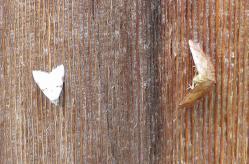 昆虫 (10)