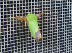 昆虫 (14)