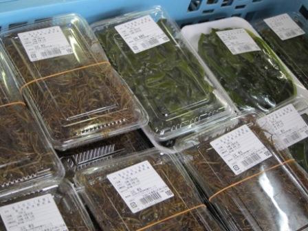 春の海藻 販売