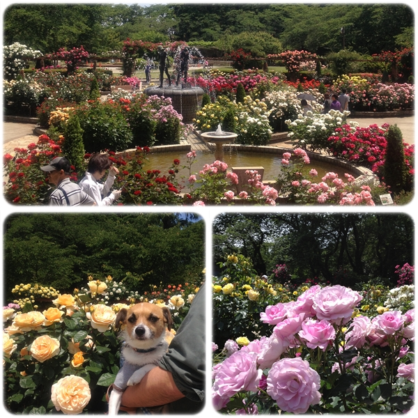 里見公園バラ園02