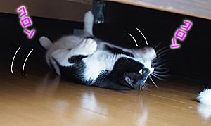 ベッドの下でコロンコロン
