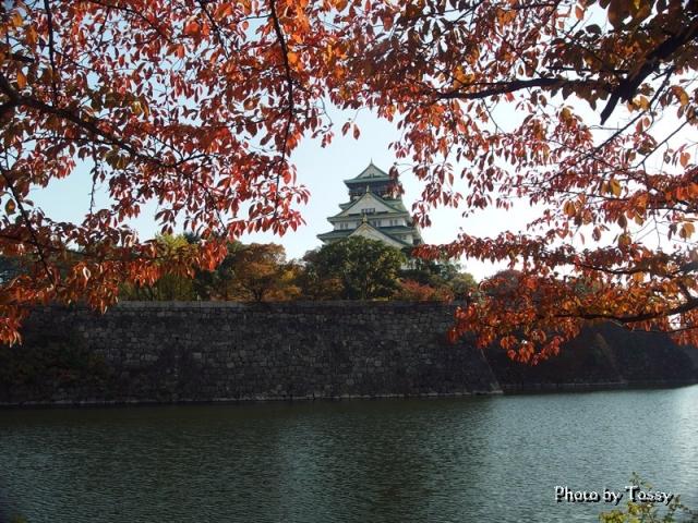 桜紅葉の大阪城