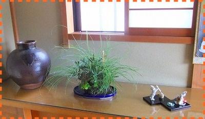ヤクシマススキ・ナンバンギセル①24日