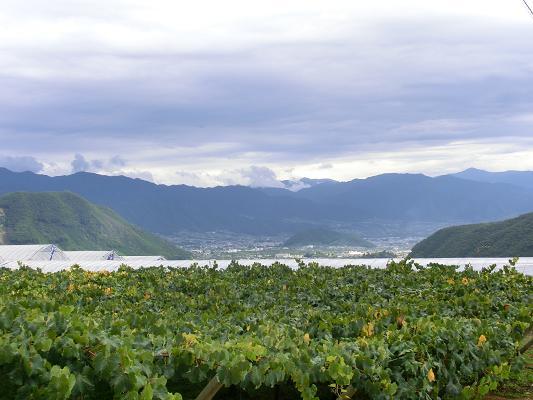 okinawa 924-1
