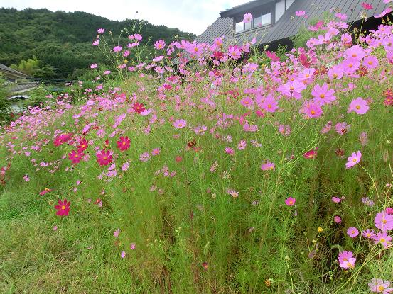 okinawa 934-1