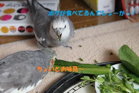 マロン登場!