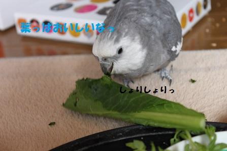 小松菜おいしいなっ