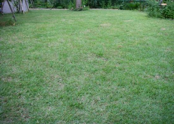s芝刈り終了