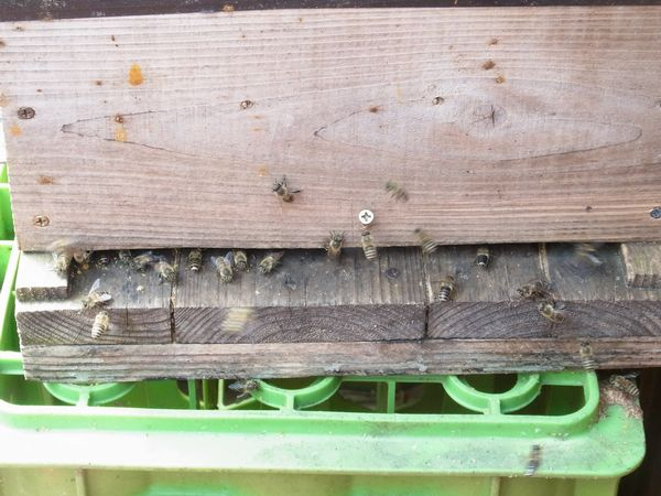 我が家のミツバチ