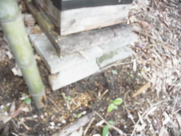 オス蜂の巣蓋