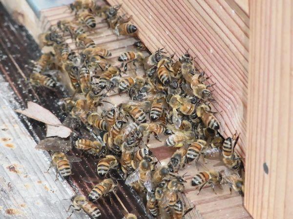 良く見ると花粉を運んでるのも居ました