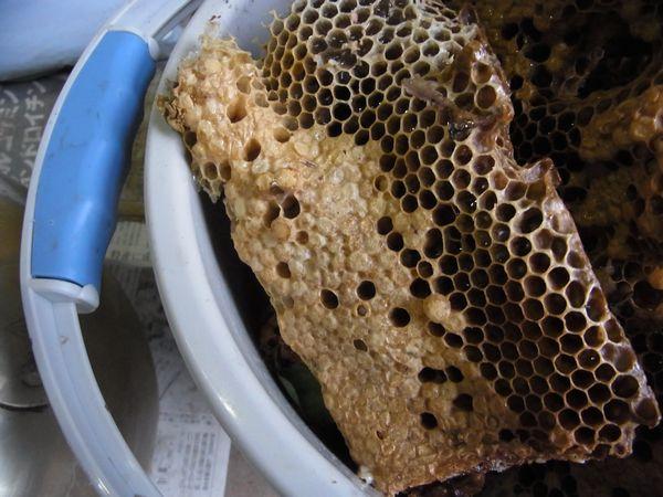 重箱から取り出した巣板