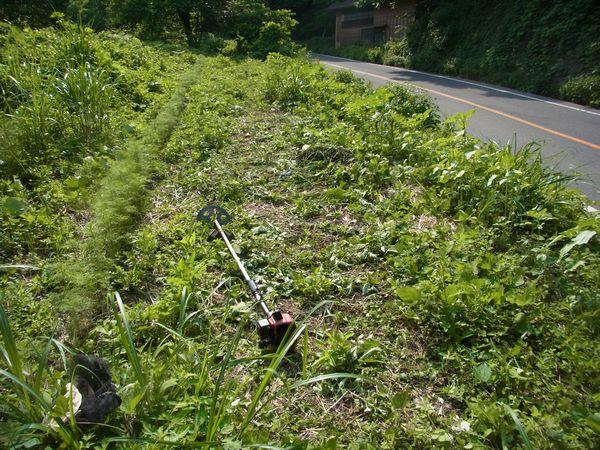 山の花畑・・・草刈り前