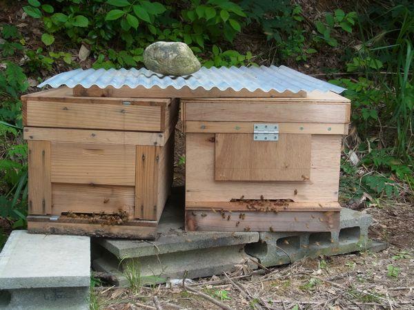 もう1つの洋蜂