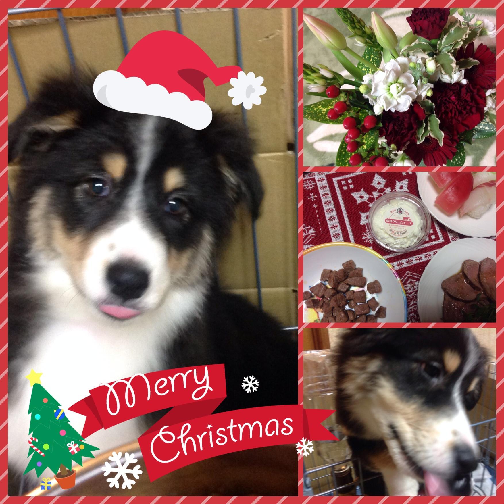 Alanaのファーストクリスマス♪