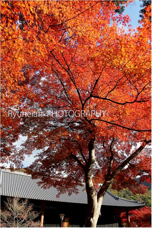 RYU_2788kkiihhy35.jpg