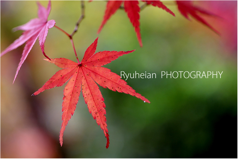 RYU_2836.jpg