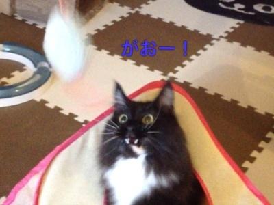 image_20130406084707.jpg
