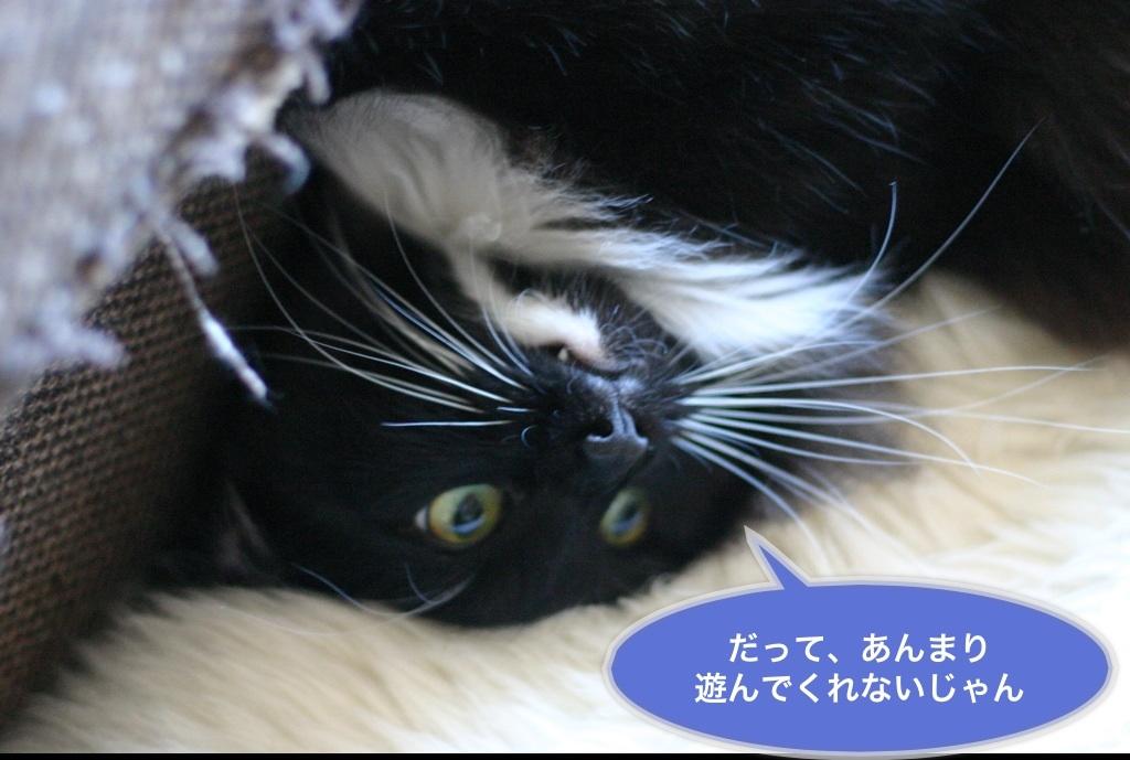 image_20130526191311.jpg