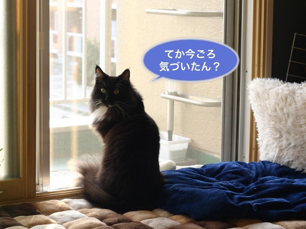 image_20130617011001.jpg
