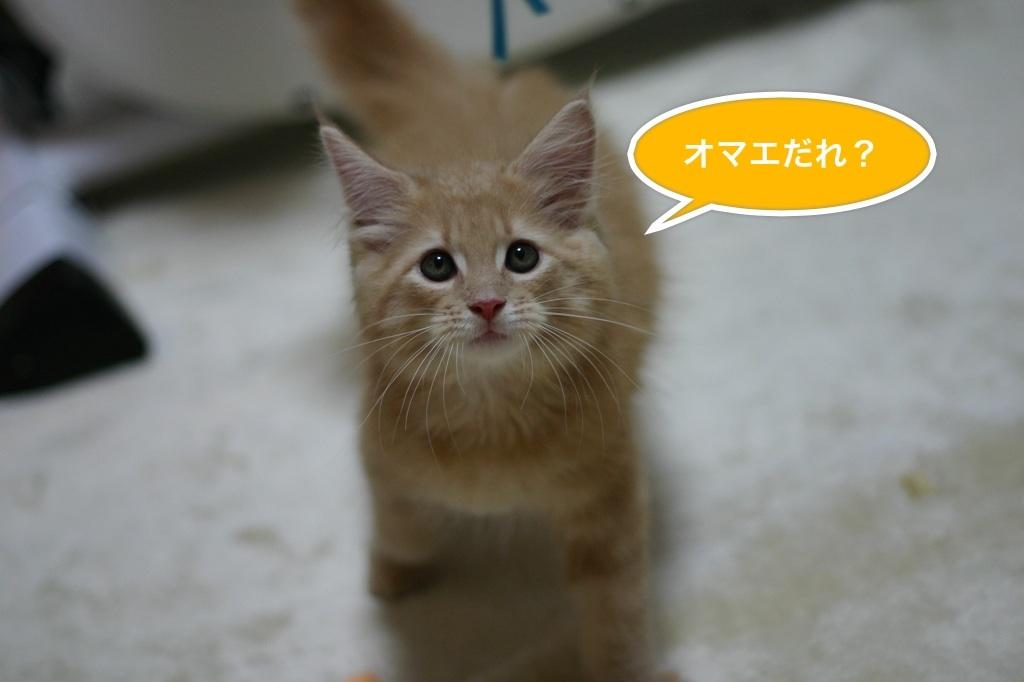 image_20130726045047.jpg