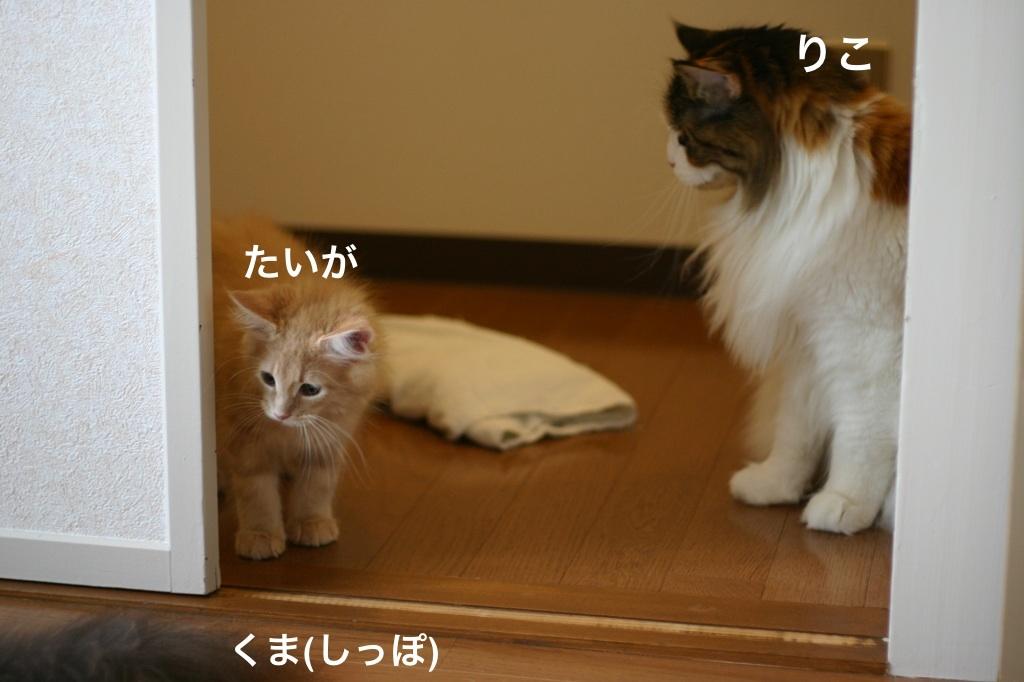 image_2013080206550110d.jpg