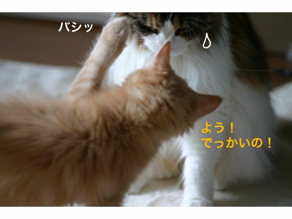 image_2013080206550869e.jpg