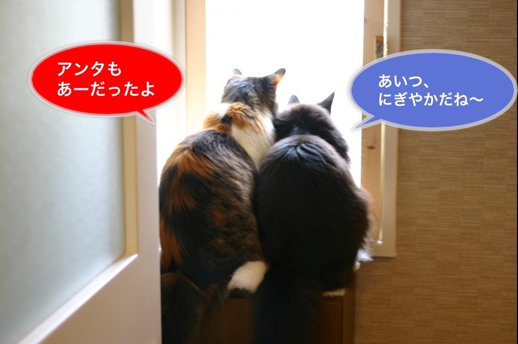 image_20130802065527f6e.jpg