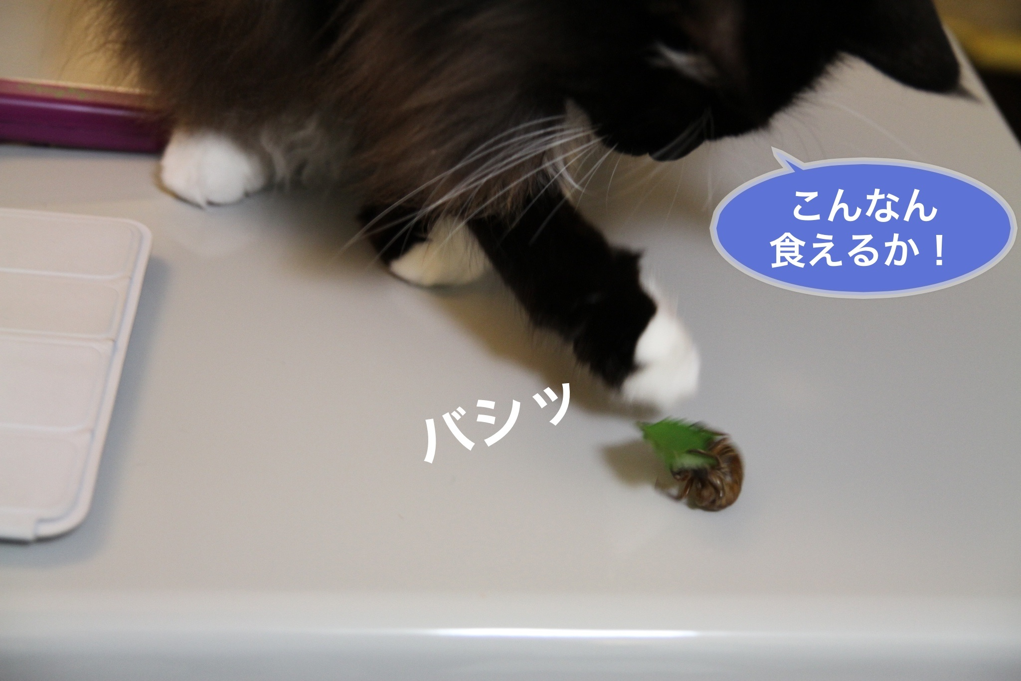 image_20130824174619dfe.jpg