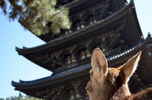 京都1−2_convert_20130328184230