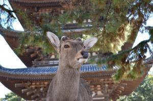 京都1−3_convert_20130328184316