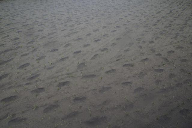 ⑤-5田植え雨