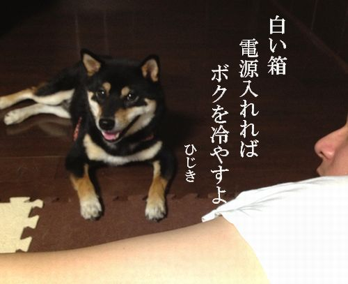 hijiki3072012.jpg