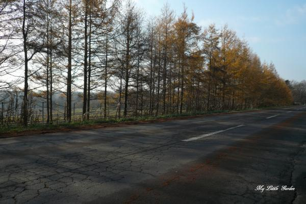 野幌原始林