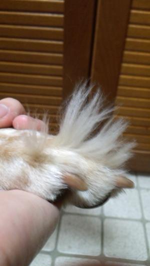 指毛2みに