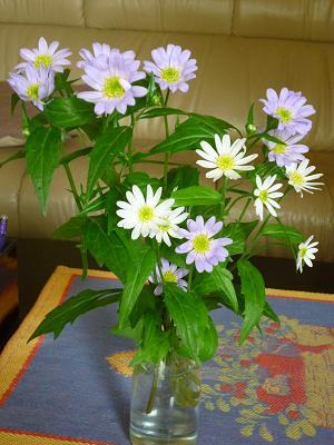 お花いろいろ 019