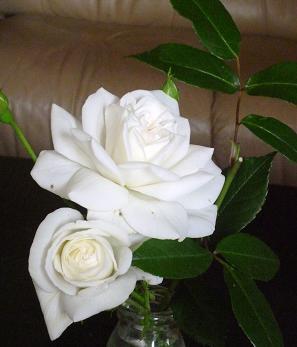お花いろいろ 020
