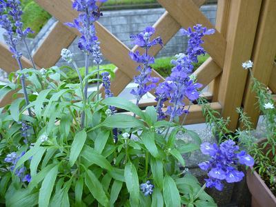 庭の花々 004