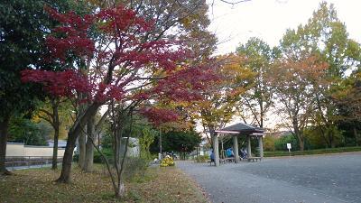 公園の紅葉 010