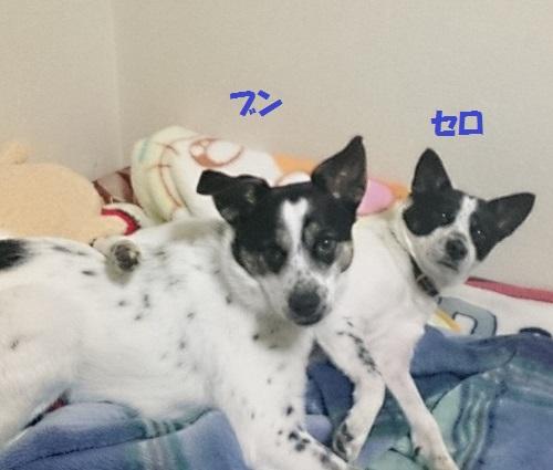 セロくん通信5