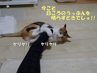 20130530_122.jpg