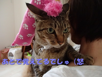 20130602_01.jpg