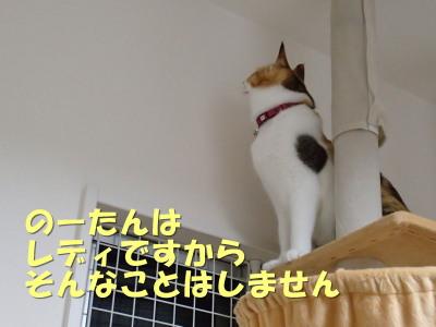 20130606_64.jpg