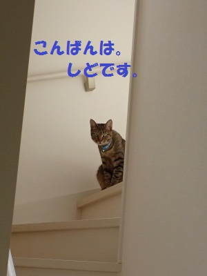 20130630_02.jpg