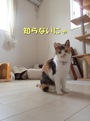 20130704_28.jpg