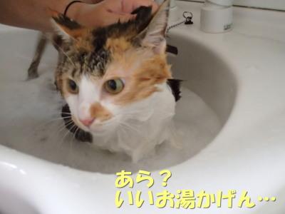 20130713_240.jpg