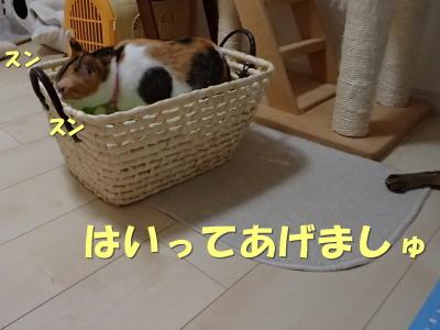 20130715_135.jpg