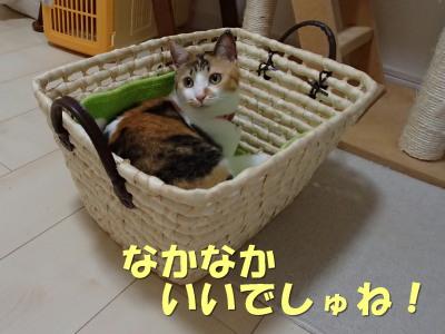 20130715_141.jpg