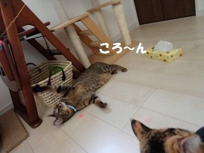 20130731_132.jpg
