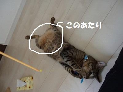 20130731_209.jpg